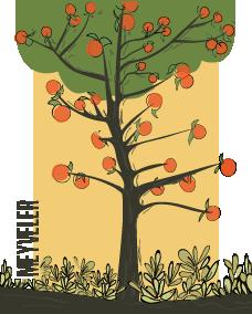 Meyveler Kategorisi Görseli